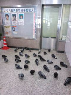 鳩の団体待ち合わせ場所